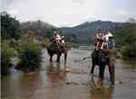 elefanti luang prabang tuttolaos