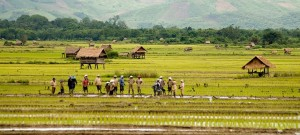 laos agrobusiness tuttolaos