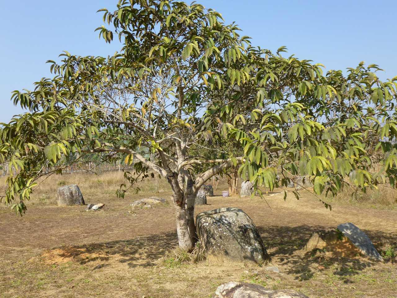 Laos e misteri archeologici: la Piana delle Giare