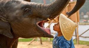 ban na elefanti 1 tuttolaos