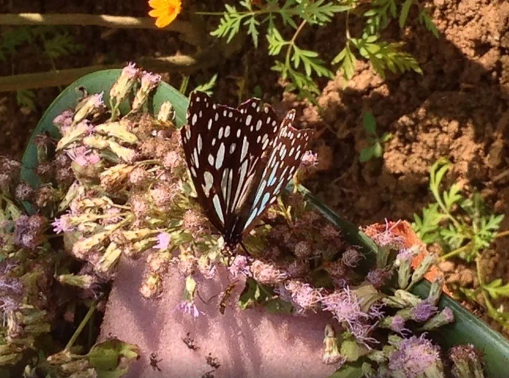 Farfalle a Luang Prabang: il Butterfly Park