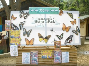 butterfly park luang prabang 3 tuttolaos