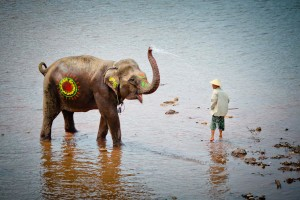 festival elefanti laos 1 tuttolaos