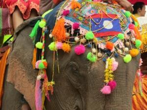 festival elefanti laos 2 tuttolaos