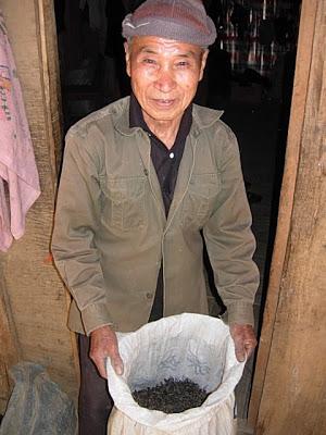 il te laotiano raccolto e lavorato