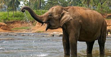 elefanti in laos 1