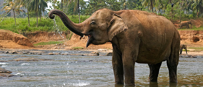 Il Laos, gli elefanti e la festa di Xayaboury