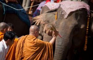 elefanti in laos 3