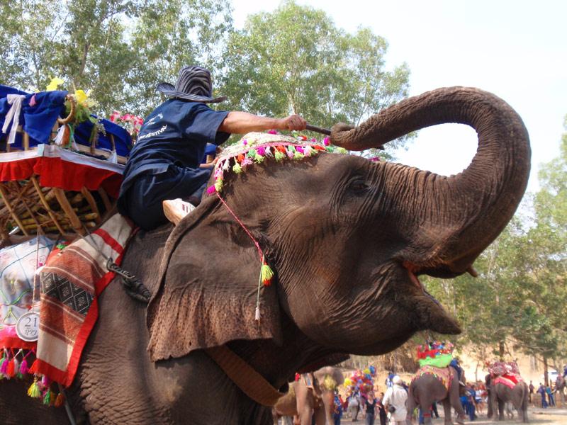 Laos: il festival degli elefanti di Sayabouli